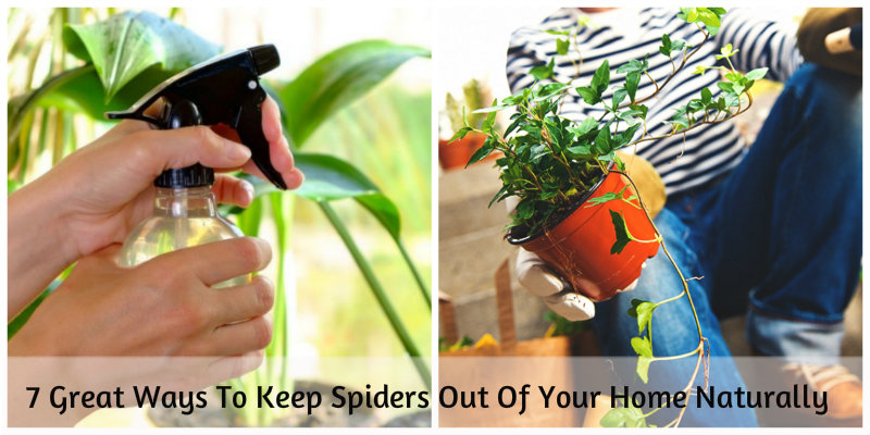 a collage of women spraying and keeping plants to keep spiders out of the house
