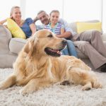family sitting on a couch and a dog is laying on a carpet